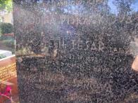 Umístění: Praha 4, Krčská 108/81, hřb. Zelená liška (Nusle), odd. 18  Nápis:  ING. VOJTĚCH TESAŘ LES. RADA NAR. 22.IV.1897 POPRAVEN 8.V.1945 SS MANY  Foto: Vladimír Štrupl, 23.9.2006   Pamětní deska Padlým v Pražském povstání  Obrázek umístění : Ulice Zikova 1903/2, budova Výzkumného a zkušebního ústavu hmot a konstrukcí stavebních  Nápis:   Zde padli v době Pražského povstání barikádníci Ing.V.tesař, P.Oppa, J.Sedláček, V.Kahovec  Souřadnice : 50°06,088 N / 014°23,521 E ( 33456523 E / 5550089 N)