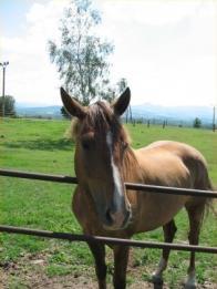 Za Domaslavicemi je výběh pro koně, když pojedete po cestě dál asi 300.m narazíte na hospůdku se zahrádkou