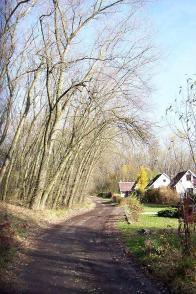Cesta k bývalému dolu Wilhelm, je roubena stromy, které rostou výrazně nakloněny směrem k západu