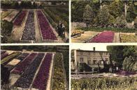 I když je to už dnes k neuvěření, pro ty z vás co Janov znají, ale byl to ovocnářský ráj. 1911.