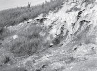 Část svahového sesuvu lomu S. K. Neumann (foto z r. 1955)