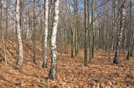 Ukázka z interiéru lesního porostu v prostoru bývalého lomu S. K. Neumann (foto z r. 2010)