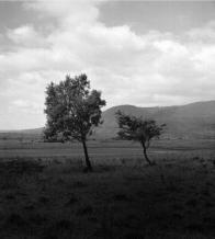 Pohled od východu do míst, na starých mapách pojmenovaných Die See Wiese (Jezerní louka,) po zaniklém Komořanském jezeru kde později vzniklo Dřínovské jezero. foto: Standa Krčka