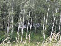 Druhá pinka vpravo, směrem po hrázi do Jiřetína, je v místech, kde by byl rozliv VD Loupnice