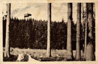 Rozhledna Jeřabina utopena v bujných lesích