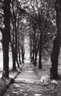 Kaštanová alej v zahradě bývalé lesovny v roce 1944, západní část stromořadí částečně dodnes zachována