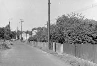 Osada Pokrok 70. léta - pohled na ul. Svobody z již zatravněné a náletovými křovinami obrostlé výsypky povrchového dolu Pokrok