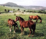 Oblast zemědělská se nachází na jihu Mostecka, největšími obcemi jsou Havraň a Bečov, vstupuje do ní část Českého středohoří typickými kopci vulkanického původu