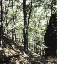 Národní přírodní rezervace Jezerka