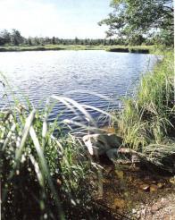 Přírodní rezervace Černý rybník