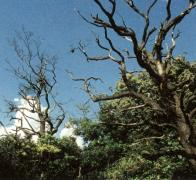 Přírodní památky Lužické šípáky